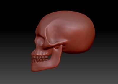 Teschio. / Skull